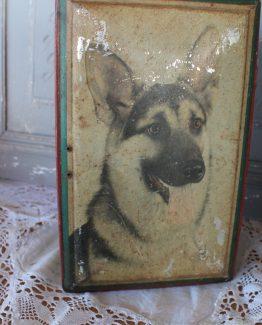 hondenblik (2)